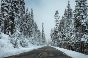 Snowy road with trees in winter