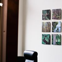 Prints of Northwest Trees on Wall