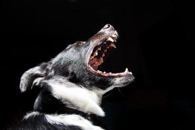 Washington State Dog Bite Law