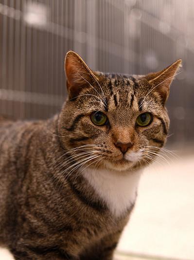 cat-at-vet