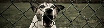 Dog behind fence opening its mouth